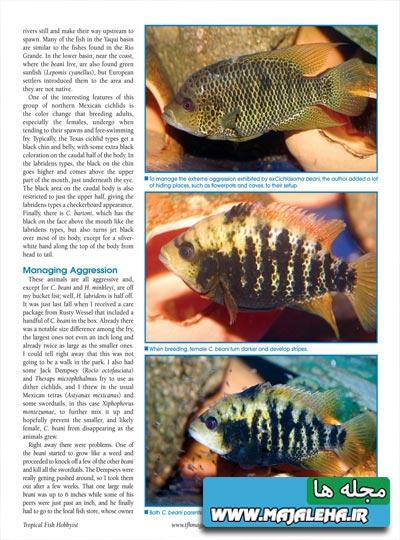 tropical-fish-2013-08-01