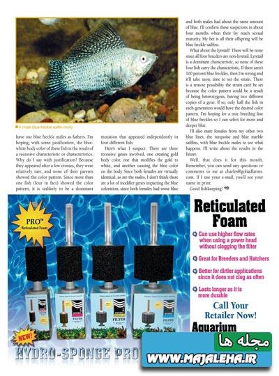 tropical-fish-2013-08-02