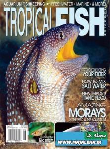 tropical-fish-2013-08