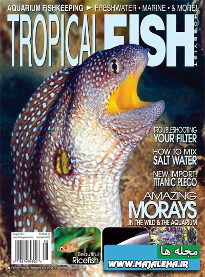 tropical-fish-2013-08