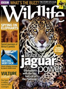 bbc-wildlife-september-2016