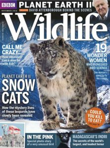 bbc-wildlife-november-2016