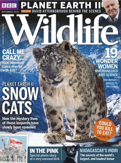 bbc-wildlife-november-2016
