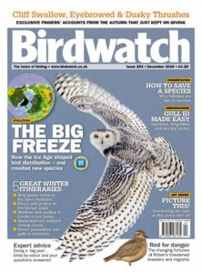 birdwatch-uk-december-2016